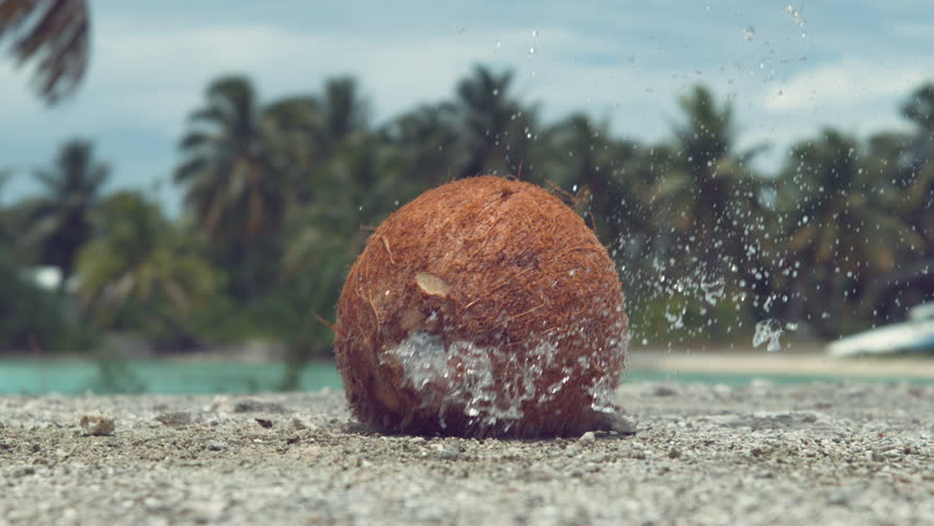 SLOW MOTION, CLOSE UP: Hard coconut gets thrown at concrete ledge and cracks wide open. Pieces of coconut shell and refreshing coconut water fly up in the air after the fruit falls from the tree. | Shutterstock HD Video #1012286879