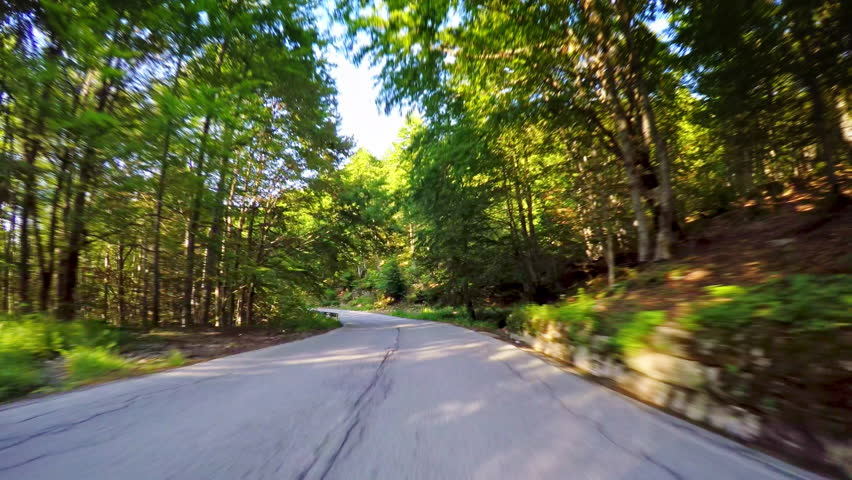 Nature POV drive, pristine lush forest with green trees, spring sunny day, local asphalt road, car travel gopro point of view  | Shutterstock HD Video #1012352921