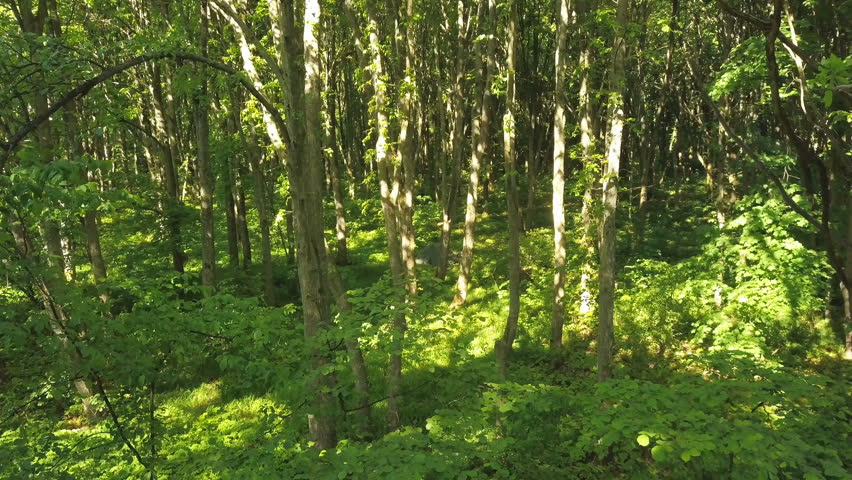 4K  Aerial.  Slow smooth fly up inside green summer wood. Rear movement | Shutterstock HD Video #1012390823