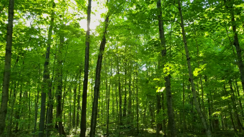 Personal perspective walking in the forest during the beginning of summer in North America | Shutterstock HD Video #1012398161
