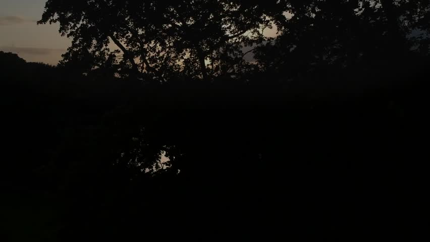 Reveal the sunset behind a tree over the lake.   Shutterstock HD Video #1012420067