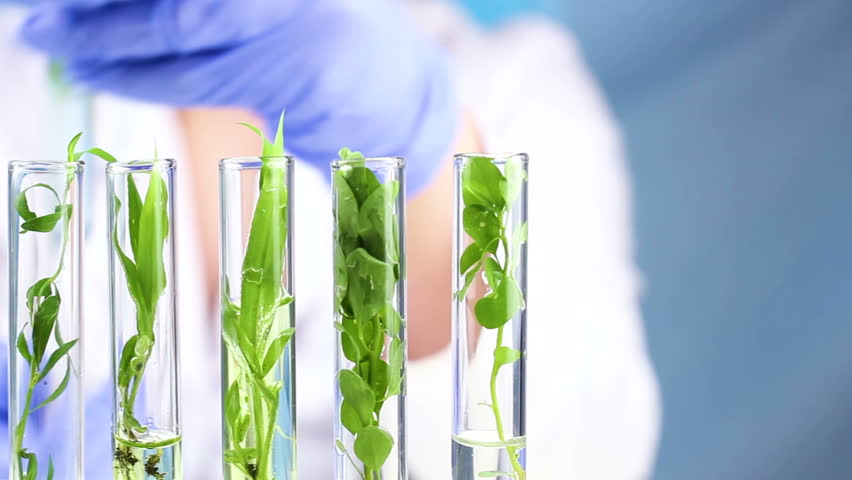 Scientist work with plant in test tubes in laboratory. Close up.
