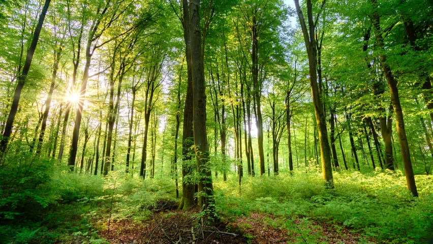Beautiful sun rays illuminating a beech forest in vivid shades of fresh green, time lapse dolly shot