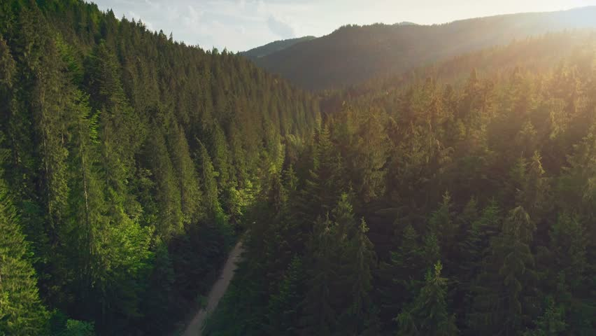 Aerial Drone View: Flight over pine tree forest and country road in sunset soft light. Mountain range in background. Nature, travel, holidays. Carpathians, Ukraine, Europe. Camera go up. 4K motion | Shutterstock HD Video #1012449668