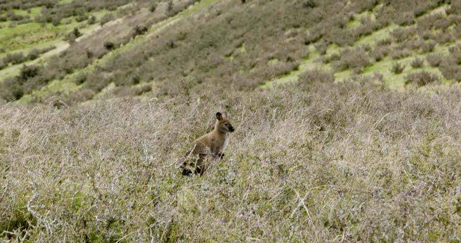 Closeup Of New Zealand Wildlife #1012517768