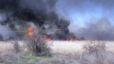 burning trees in Wildfire and lot of black smoke on background blue heaven