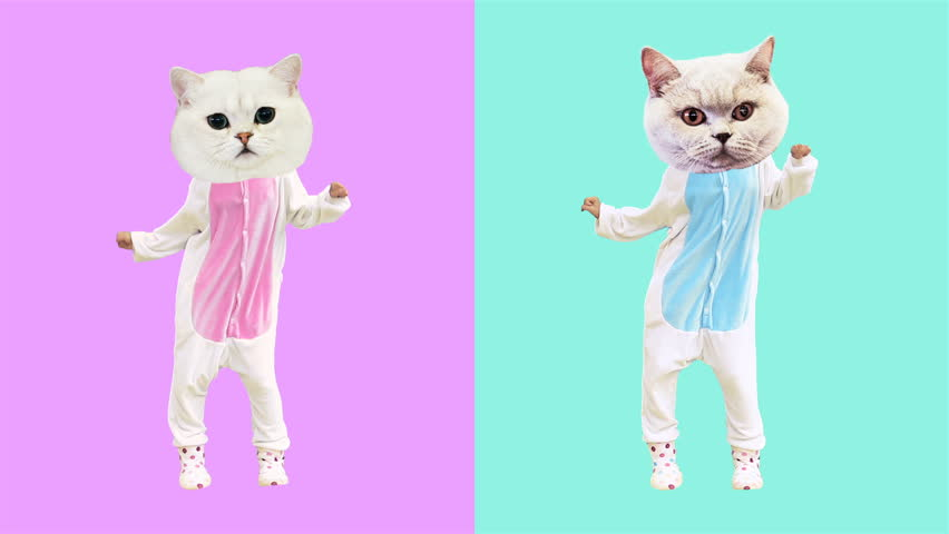 Minimal motion art. Dancing funny cats. Boy and Girl power