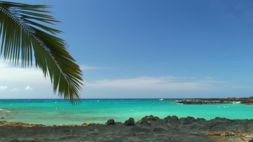 Palm Leaf Rustles Over Azure Water   Shutterstock HD Video #1012716830