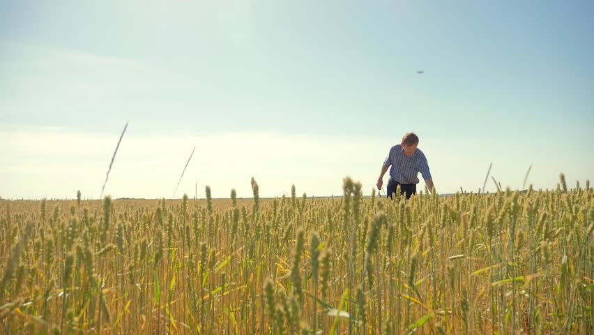 Old farmer man running in the field agriculture man concept. Wheat sprouts in farmer's hand.Farmer Walking Through Field Checking Wheat Crop. agriculture man concept lifestyle | Shutterstock HD Video #1012801673