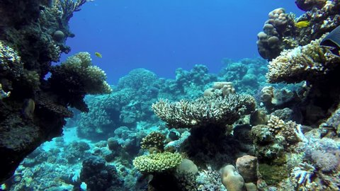 Life in the ocean. Tropical fish and coral reefs. Beautiful corals.