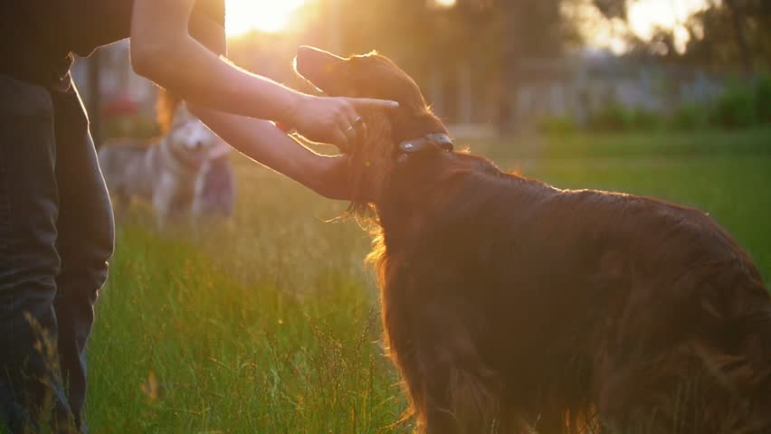 Young man playing with his dog irish setter on the grass at sunset | Shutterstock HD Video #1012917014