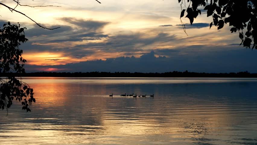 Canada Geese swimming in Lake Irving in Bemidji Minnesota during a beautiful sunset   Shutterstock HD Video #1012943174