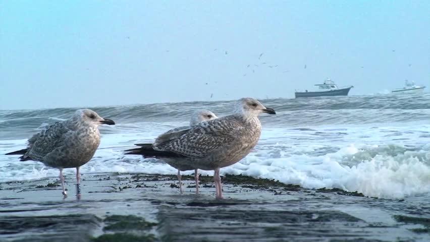 Wave Breaker Birds | Shutterstock HD Video #1012987586