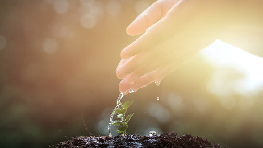 Hand of boy watering a young plant tree growing on fertile soil in the morning light, Slow Motion. Conservation of Natural Resources. Planting the trees, protect nature, sustainability, sustainable