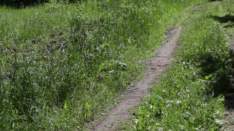high green grass landscape, video