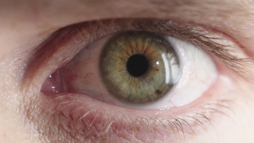 Close up human eye opening iris contracting looking surprised shocked pupil reflection   Shutterstock HD Video #1013095880