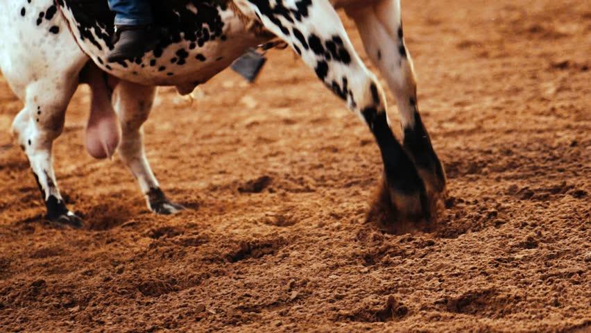 Slow Motion Bull Riding Dirt Flying