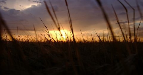 A view of passing grass against the sunset