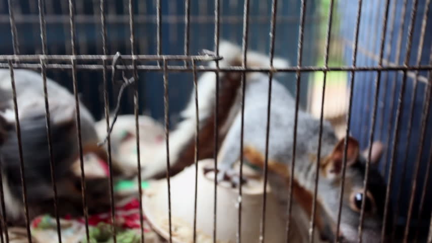 Close-Up: Squirrel in Cage | Shutterstock HD Video #1013139110