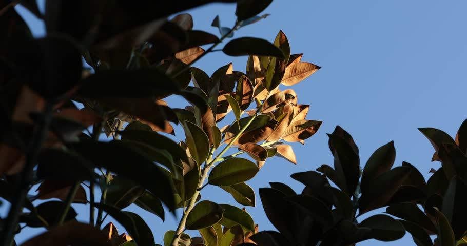 Sunlit leaves in the wind | Shutterstock HD Video #1013319953