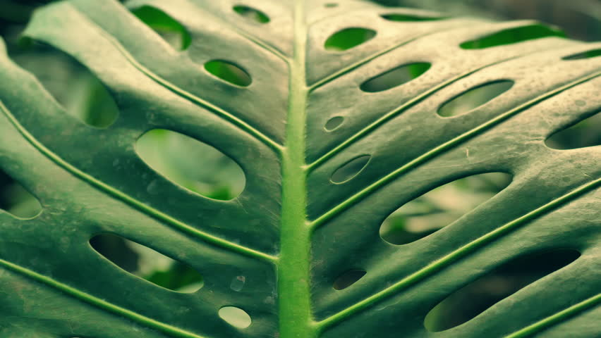 Stunning nature of amazonian forests. close-up of a palm leaf. | Shutterstock HD Video #1013460344