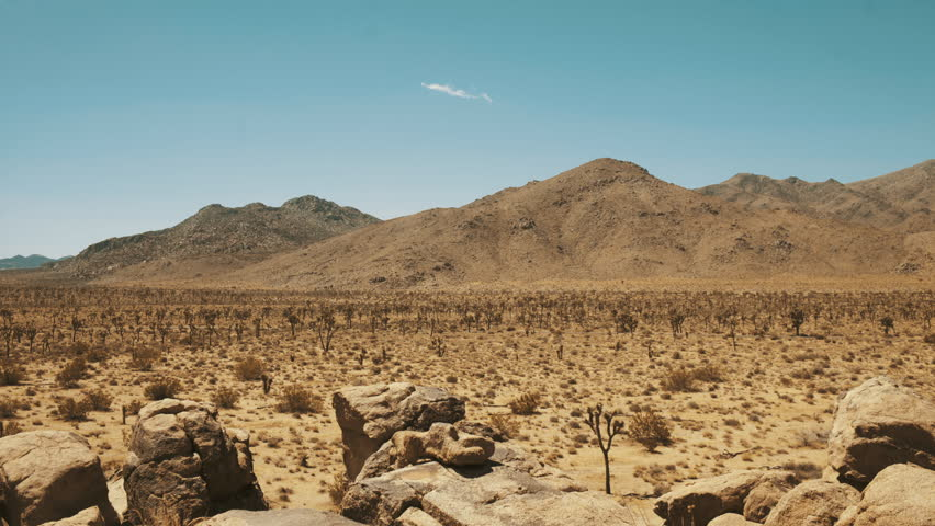 Ascending Revealing Wide shot of Mojave desert with of Yucca trees - hot sunny day