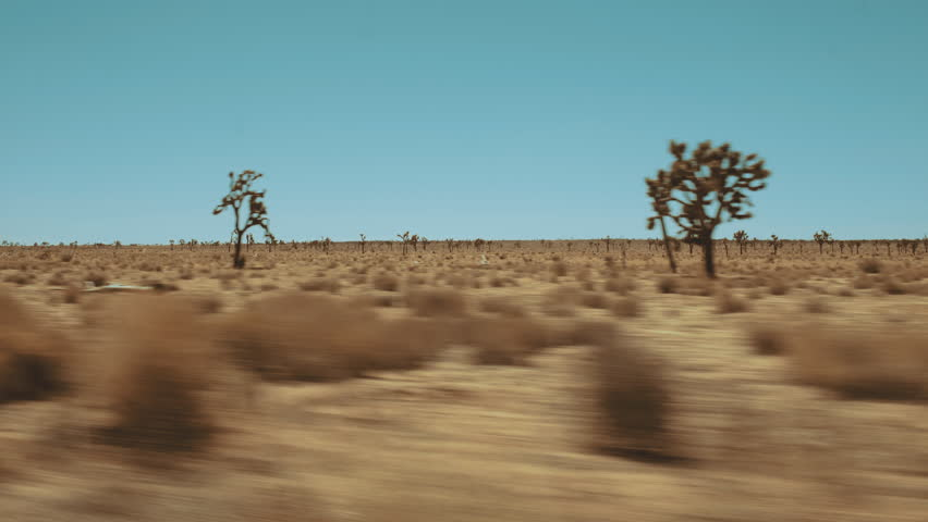 Dynamic Wide shot of Mojave desert with Yucca trees - froming car hot sunny day
