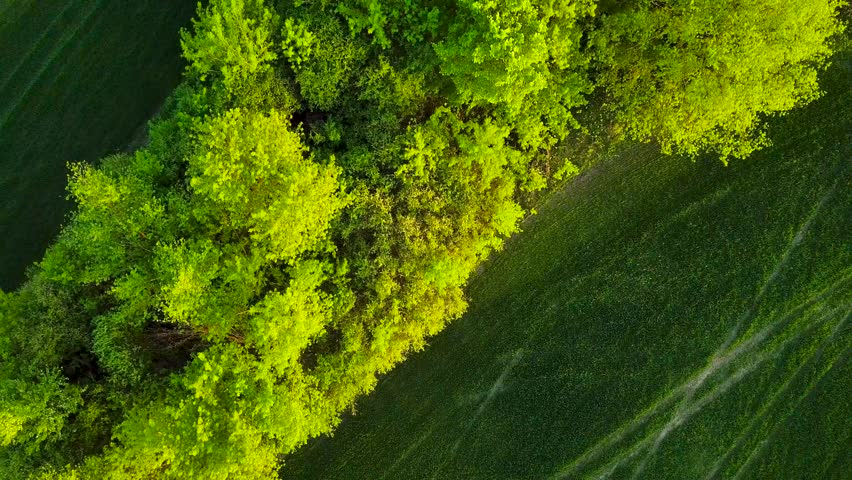 Top view of a green field and trees at sunset | Shutterstock HD Video #1013580095