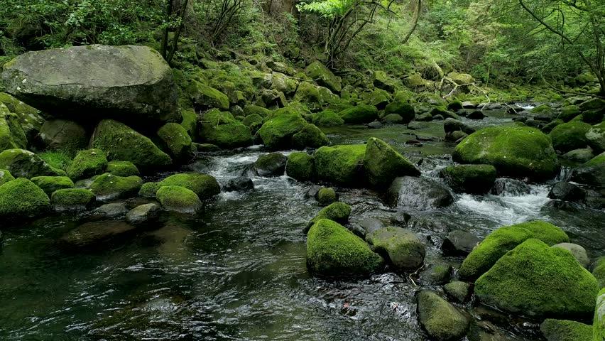 Landscape of clear stream | Shutterstock HD Video #1013695469