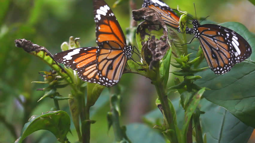 Close up of a butterfly eating a leaf. At the time of the strong winds. | Shutterstock HD Video #1013710559