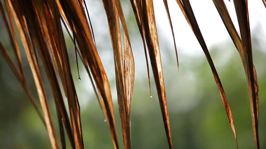 Rain drops down from the thatch roof to the ground. As the sun shines. | Shutterstock HD Video #1013710670