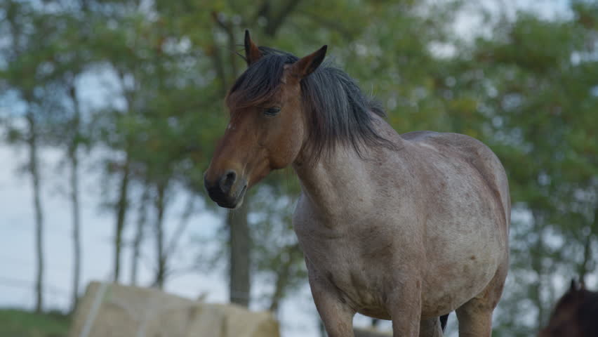 A brown horse with black mane