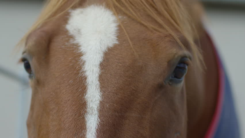 View of a brown horse with a white blaze.