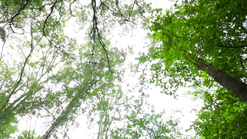 Tilt down from sky to forest | Shutterstock HD Video #1013758502