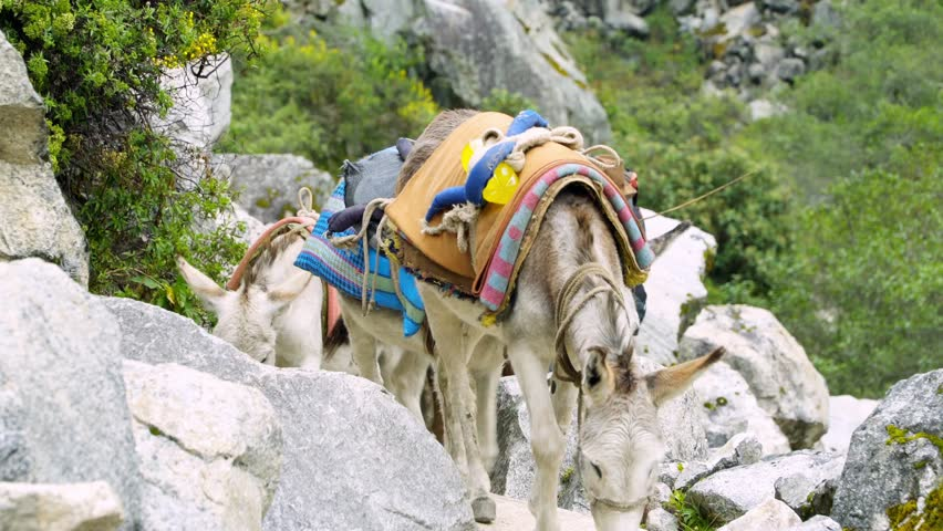 Huaraz Santa Cruz Trekking in the Mountains with donkeys
