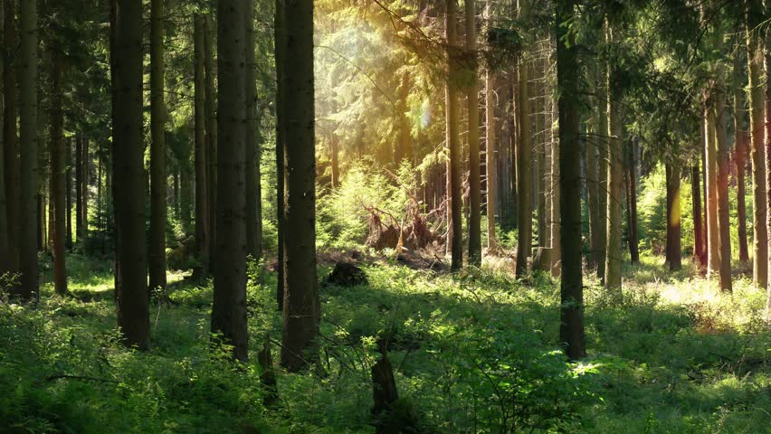 Static film about the forest in the Sauerland. The original sound contains bird chirping. Relaxed atmosphere. | Shutterstock HD Video #1013872160