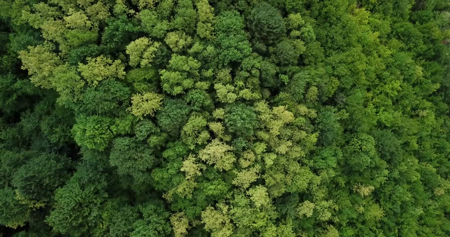 Aerial top view of summer green trees in forest background, Caucasus, Russia. Drone photography. Coniferous and deciduous trees, forest road. Beautiful panoramic photo over the tops of pine forest.
