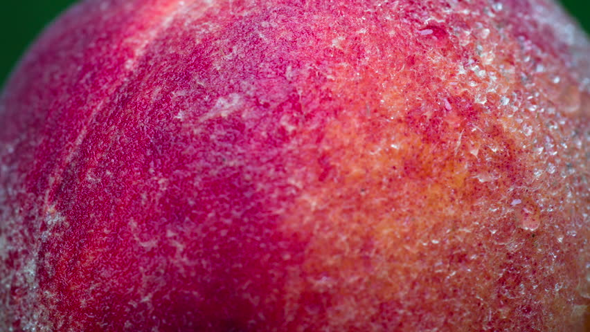 Peach Covered with Dewdrops. Peach closeup rotates in front of the lens. Its velvety surface is covered with small drops of water   Shutterstock HD Video #1013946272