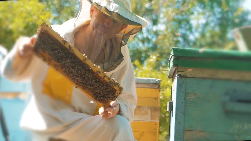 beekeeper holding a honeycomb full of bees. Beekeeper inspecting honeycomb frame at apiary. Beekeeping concept slow motion video lifestyle. beekeeper holding a honeycomb full of bees. Beekeeper Royalty-Free Stock Footage #1013967074
