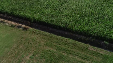 fly over a field of ears in Italy