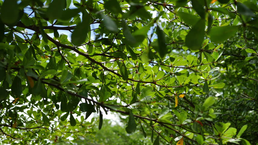 green tree in nature garden #1013978984