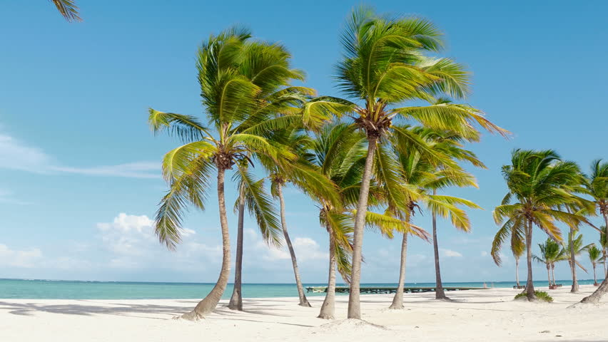 Dominican republic beaches, island beach, The best beaches in the world  / Beautiful palm trees on the shore of the blue sea. Atlantic Ocean, the beaches of Punta Cana. Caribbean turquoise sea water | Shutterstock HD Video #1013995907