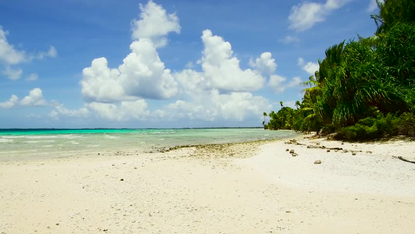 Travel, seascape and nature concept - tropical beach with palm trees in french polynesia   Shutterstock HD Video #1014247967