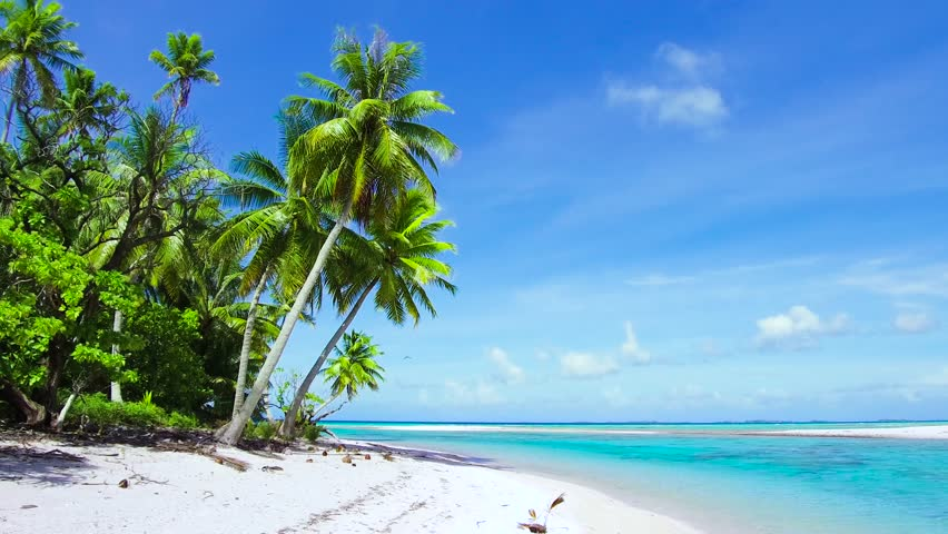 travel, seascape and nature concept - tropical beach with palm trees in french polynesia #1014248078