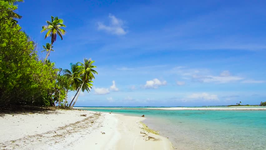 Travel, seascape and nature concept - tropical beach with palm trees in french polynesia   Shutterstock HD Video #1014248084
