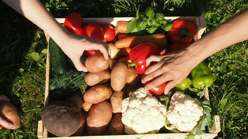 Farmers Market: Farmer's Hands Put Fresh Vegetables Into Box. Organic Vegetables, Organic Farming Concept. Healthy eating, healthy care and clean food concept. Farmer Working Garden Stock Vegetables | Shutterstock HD Video #1014309800