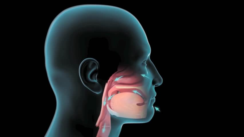 Animation of oxygen consumption with oral and nasal breathing. Royalty-Free Stock Footage #1014360971