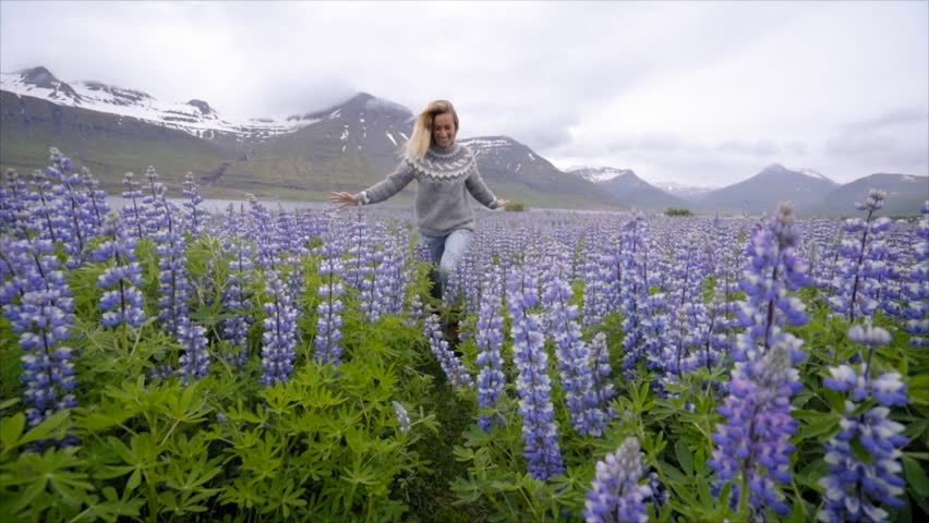 SLOW MOTION: Young woman running in purple flowers field in Iceland. Travel and adventure concept. Woman running arms wide open in nature. wind lowing in her air  #1014528761