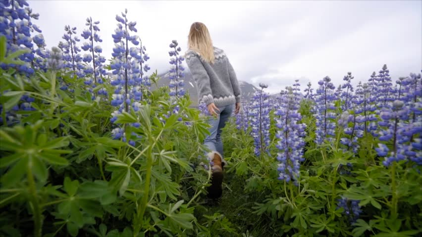 SLOW MOTION: Young woman running in purple flowers field in Iceland. Travel and adventure concept. Woman running arms wide open in nature  | Shutterstock HD Video #1014547376