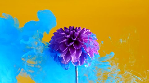 Amazing spreading of paint on a beautiful flower